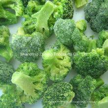 Brócolis Congelados Chineses Novos IQF