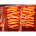 Best quality fresh carrot price