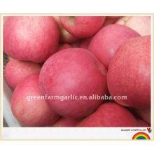 Exportateur de pomme de fuji de fruits de pomme à la Chine
