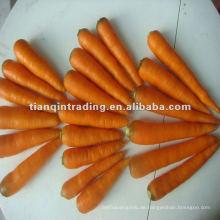 Chinesische Karotte 2012