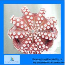 Frische gefrorene ganze Oktopus zum Verkauf mit besten Dienstleistungen