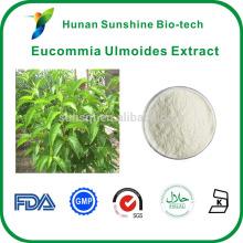 Эвкоммии ulmoides Олив хлорогеновой кислоты преимущества добавки экстракт