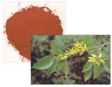 Eucommia Ulmoides Oliver Extract Chlorogenic Acid 10%-98%