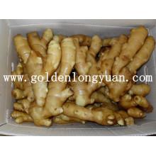 Gingembre frais fourni par Golden Supplier