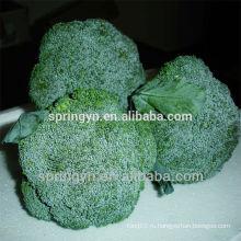Зеленая брокколи из Китая