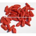 Boxthorn, fruits séchés de baies de Ningxia Yishaotang Goji à l'exportation, baies séchées Goji fruits Ningxia séchées Goji nutrition de baies