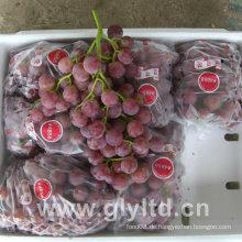 Chinesische gute Qualität frische lila Globale Traube