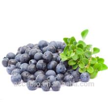 Hohe Qualität 100% natürlich zertifiziert Bio Blueberry Extract Powder