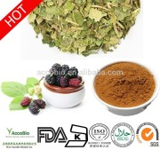 High quality Mulberry Leaf Extract,1-Deoxynojirimycin(1-DNJ)