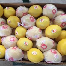 Frische Zitrusfrüchte, frische Zitronen, frische Nabel und Valencia Orangen aus China