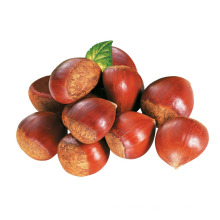 2015 Fresh Chinese Chestnuts with High Exporting Quality
