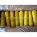 Fourniture à long terme d'echantillons de maïs sucré iqf congelés de haute qualité