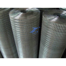Galvanized Welded Wire Mesh (TS-L12)