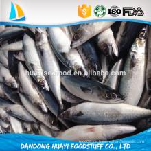 China Dosen Pazifische Makrelen Fisch Grad C