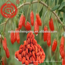 Función de la medicina china tradicional de Ningxia wolfberry