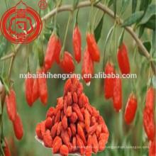 Традиционный китайский нинся wolfberry медицины