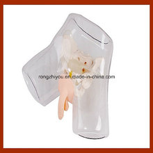 Nursing Training Transparent Male Urethral Catheterization Simulation