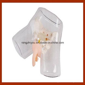 Nursing Training Transparent Male Urethral Catheterization Simulation