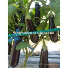 ME19 Xinguan nouvellement 55 jours violet-noir f1 hybride graines d'aubergines prix
