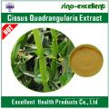 Экстракт Cissus Quadrangularis