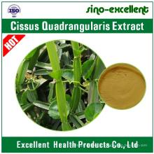 Cissus Quadrangularis Extrait / Lei Gong Teng Extrait