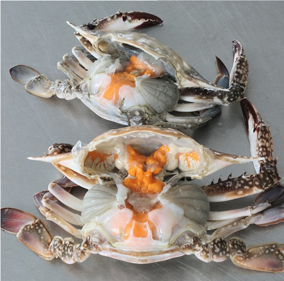 Sea Frozen Swimming Crab