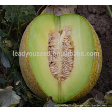 NSM011 Fafa hybrid sweet melon seeds seeder for small seed