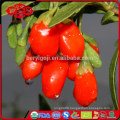 super fruit gojiberry with low price