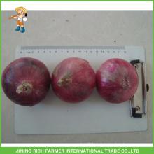 Frische Zwiebel für Malaysia