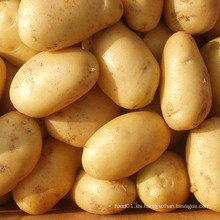 Fresh Yellow New Crop Potato (50-100g)