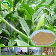 Tea polyphenols 50% for green tea extract capsules