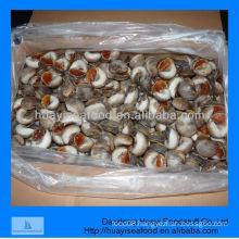 moon snail meat