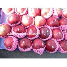 Huaniu Apfel (Größe 80/88/100)