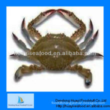 frozen crab blue swimming crab wholesale