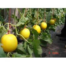F1 Hybrid High Quality Melon Benih terlaris