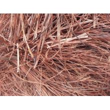Nr. 1 Kupferdrahtschrott mit 99,99% Reinheit / roter Schrott Kupferdraht / Heidelbeer Kupfer