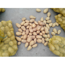 Supply New Season IQF Potato Dices