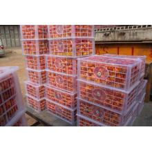 Высококачественный свежий Nanfeng Orange