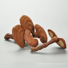 China Herbary Factory Price Sale Herb Ganoderma Lucidum Polvo