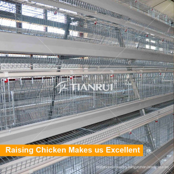 China Hot Selling Full Automatic A Type Chicken Layer Cages