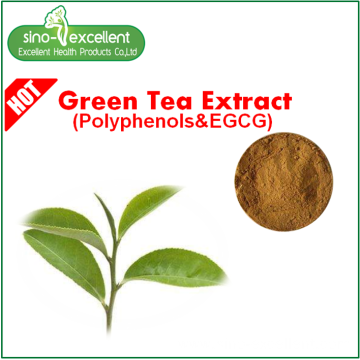 Green tea extract fine powder EGCG