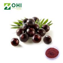 Acai Berry Extract Polvo liofilizado