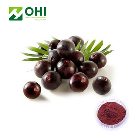 Acai Berry Extract Beku Kering Powder