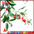 Natural Green Food goji berry can make goji juice by fresh goji berries