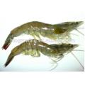 Alimentación animal de la buena función de la venta caliente para el camarón