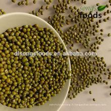 Tous les divers haricots verts avec différentes tailles