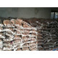 40-50, 50LB gunny bag chinese fresh chestnuts wholesale chestnuts for Canada