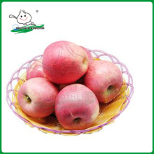 QINGUAN apple/ fresh Qinguan Apple 9kg