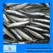good service supplier wholesale cheap frozen anchovy