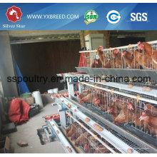 Silver Star Factory Outlet Equipo para aves de corral Gallinero de pollo